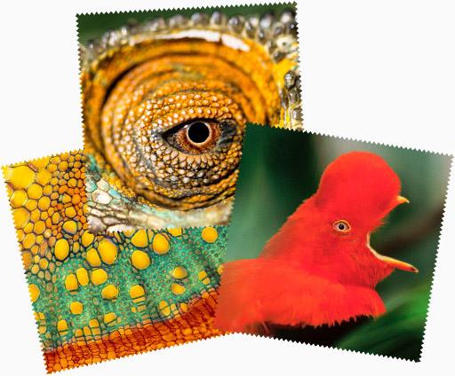 Photographies microfibres cadeaux de Gilles Martin