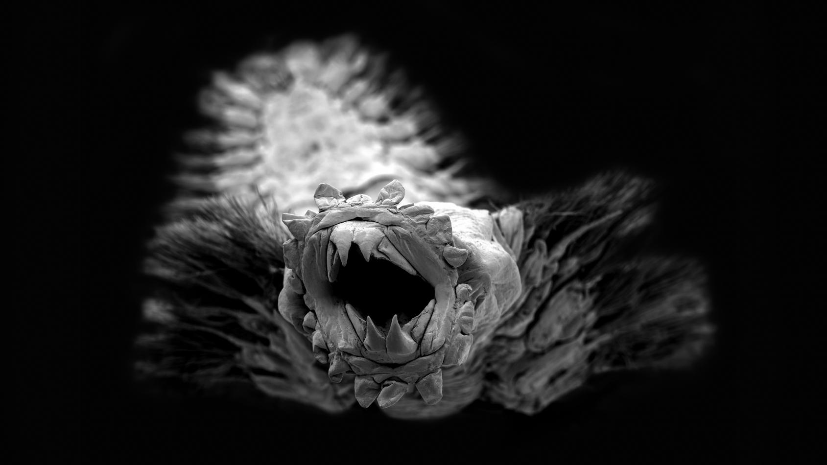 Méiofaune des abysses, Pourquoi pas les abysses ?, IFREMER, Microscope électronique à balayage (MEB)