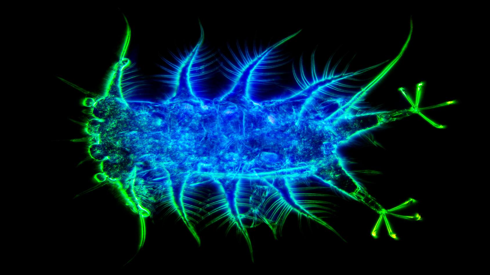 Méiofaune des abysses au microscope optique
