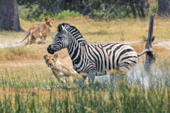 Voyage au Borswana