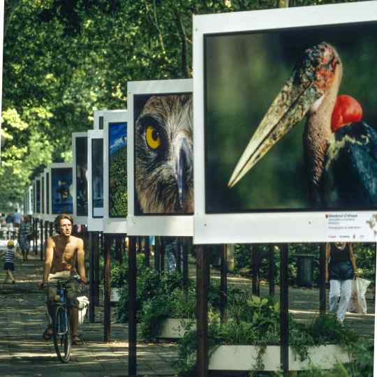 Gilles Martin's photograph from the exhibition Birds of the world