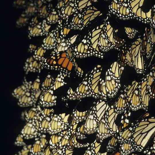 Gilles Martin's photograph from the exhibition Butterflies of the world