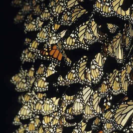 Photographie de Gilles Martin de l'exposition Papillons du monde