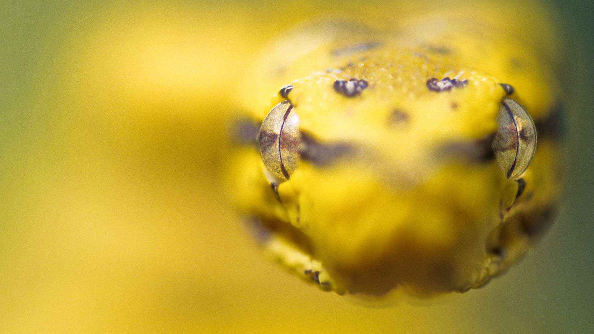 Gilles Martin's photograph of green tree python from Australia