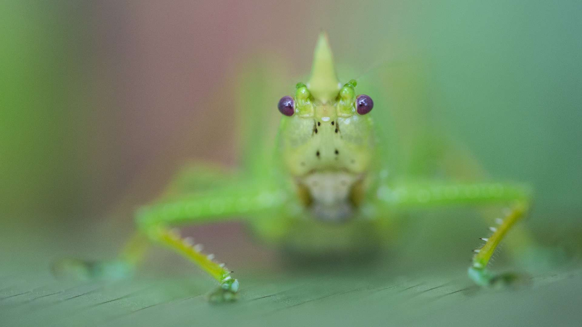 Gilles Martin's photograph of a grasshopper from Costa Rica