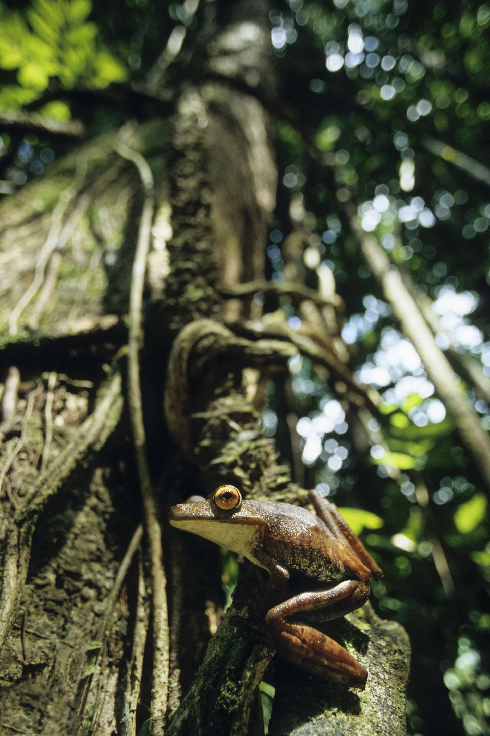 Gilles Martin's photograph of a tree frog from French Guiana