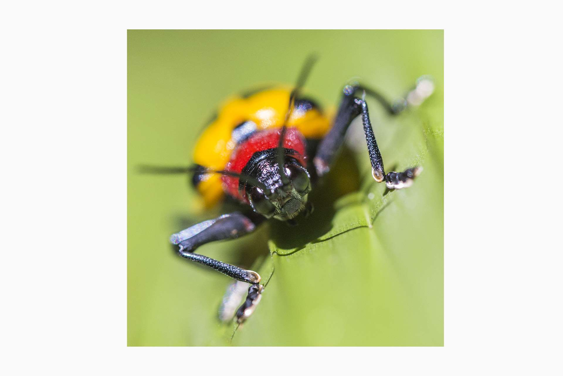 Gilles Martin's photograph of a beetle from Costa Rica