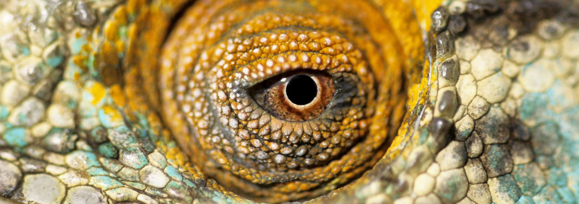 Gilles Martin's photograph of chameleon from Madagascar