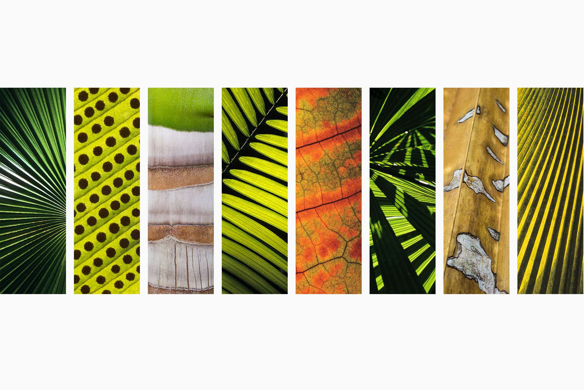 Gilles Martin's photo-montage from Tropical rainforest