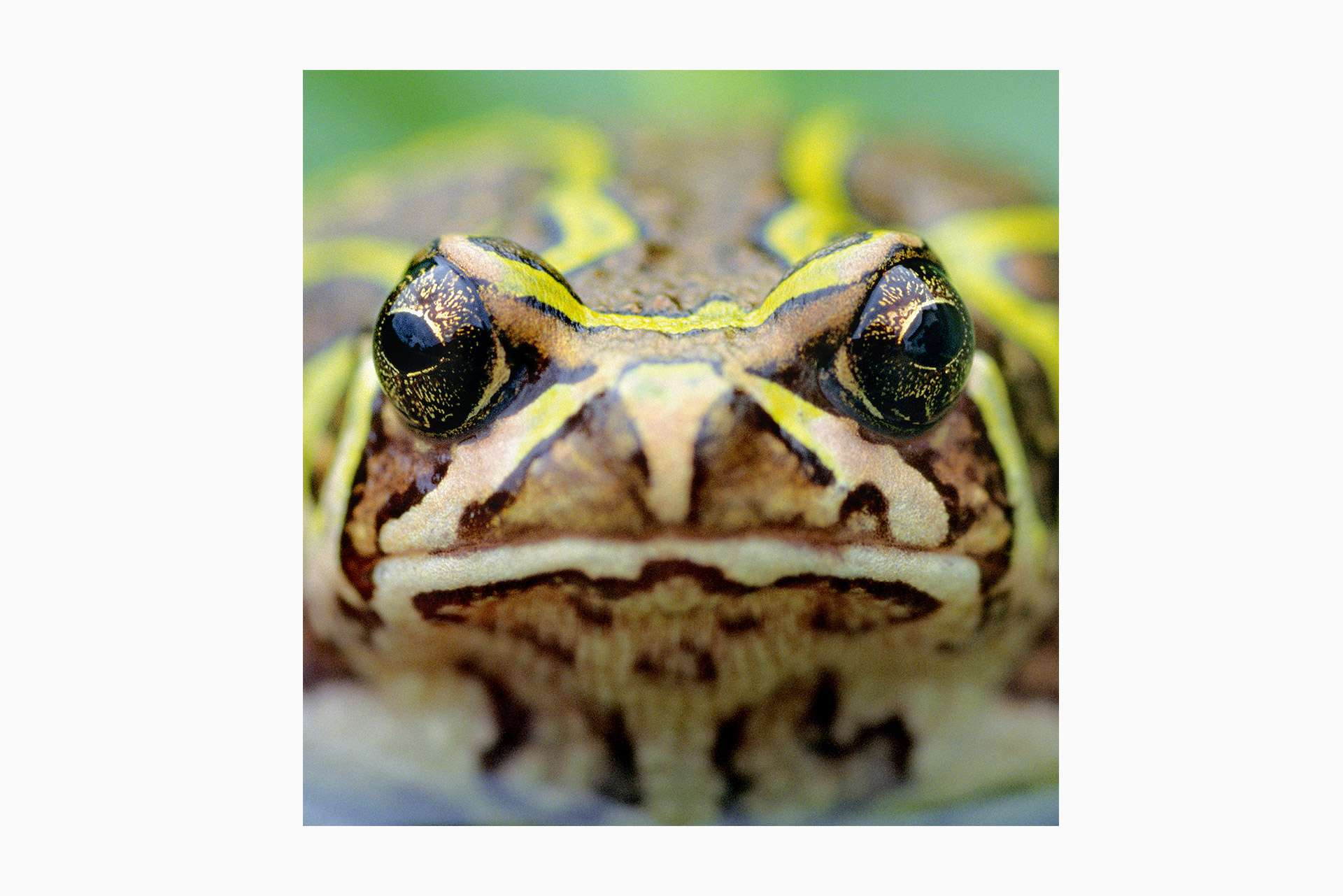 Gilles Martin's photograph of a toad from Madagascar