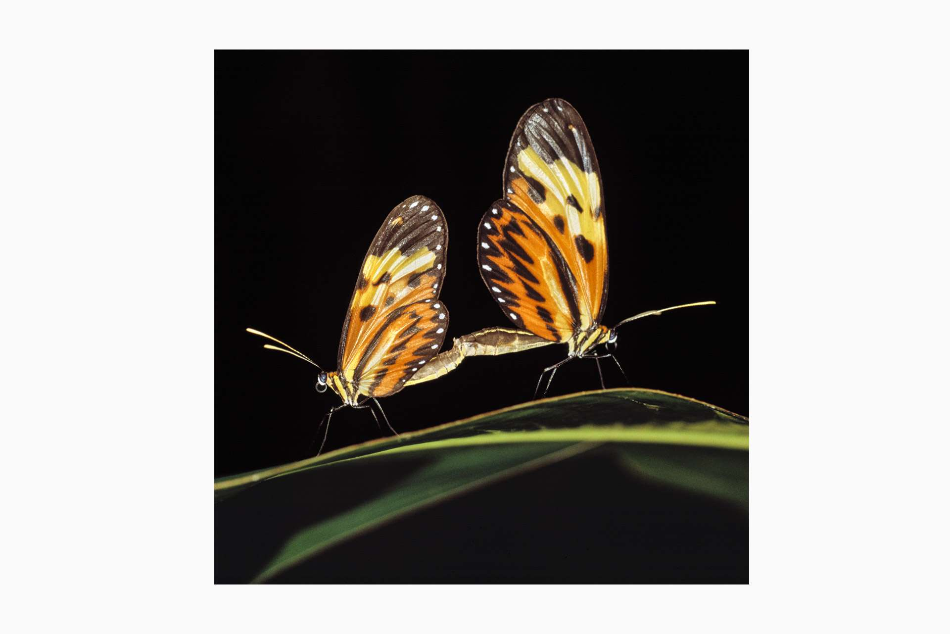 Gilles Martin's photograph of a butterfly from Suriname