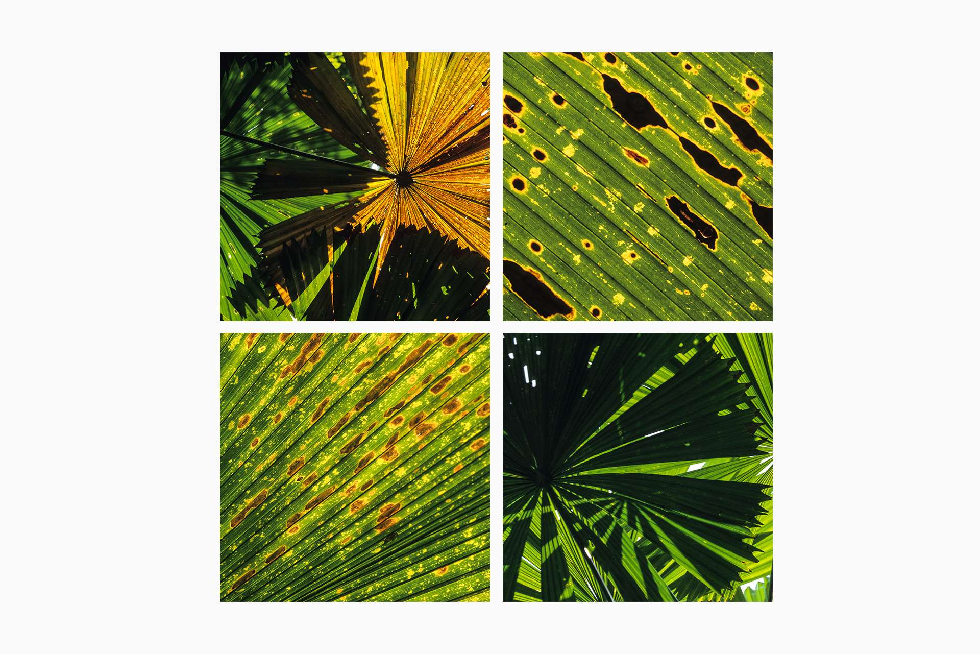 Gilles Martin's photograph of vegetation from cape Tribulation in Australia