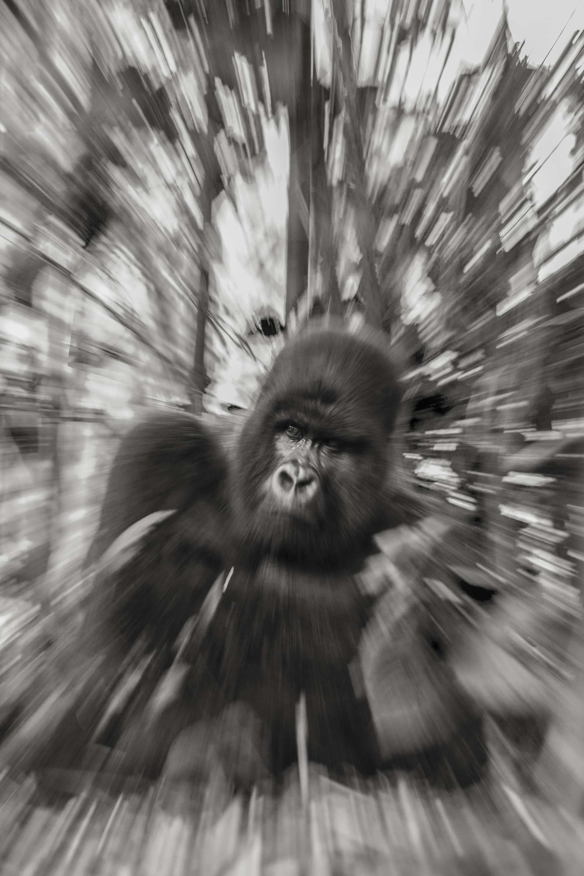 Gilles Martin's photograph of a gorilla from Rwanda
