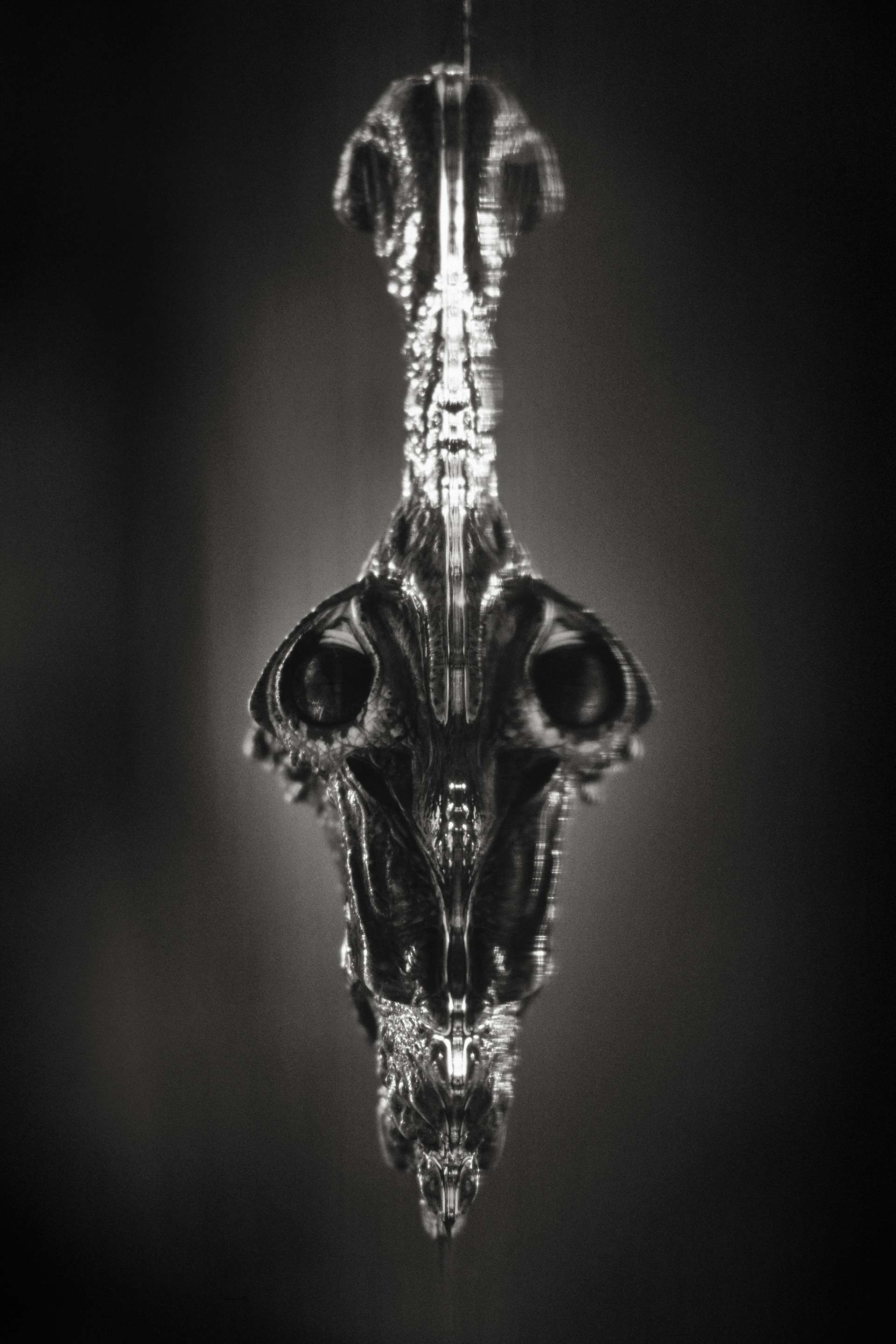 Gilles Martin's photograph : chinese alligator, Struggle for life