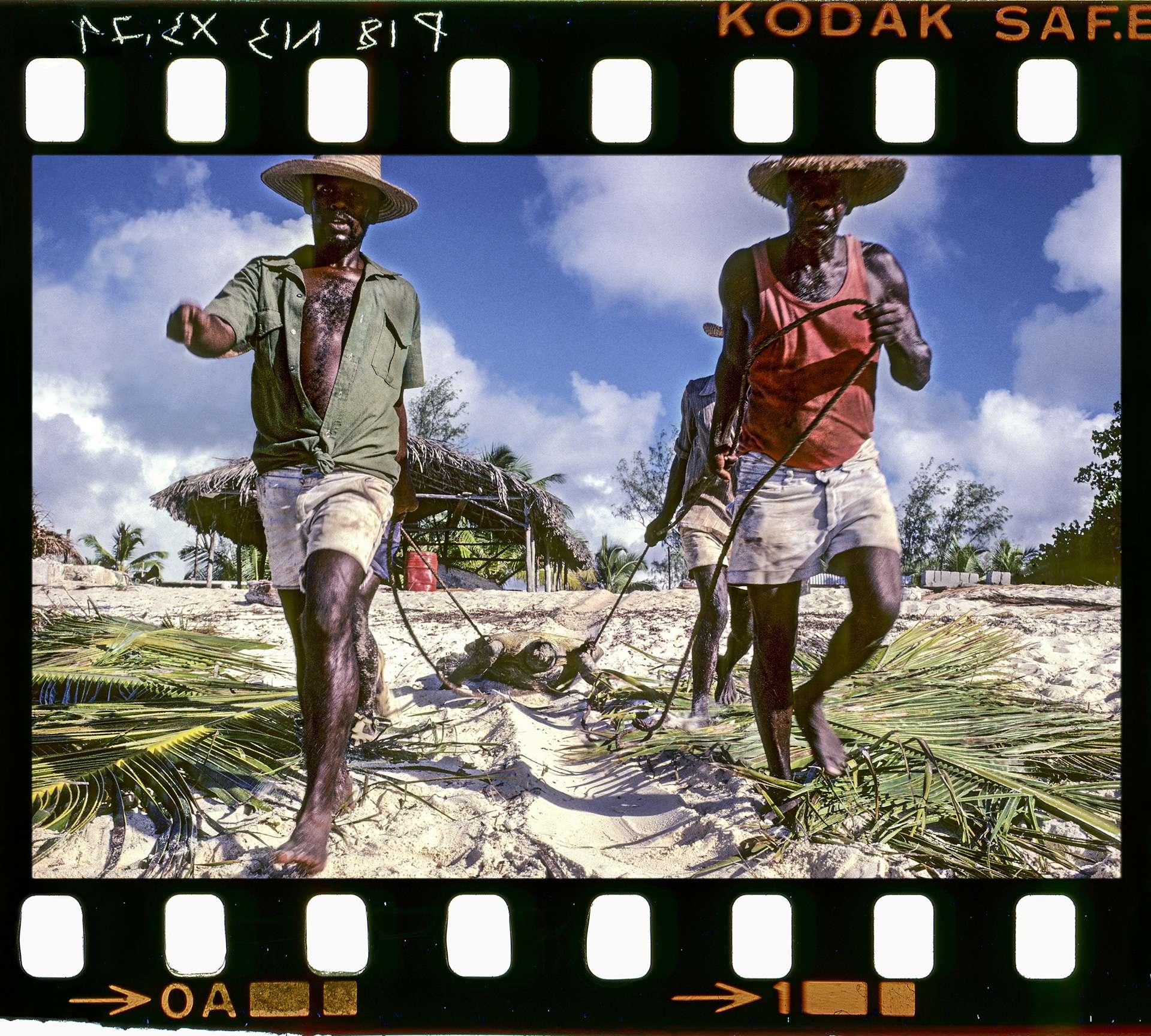 Photographie de Gilles Martin du trafic des tortues de mer