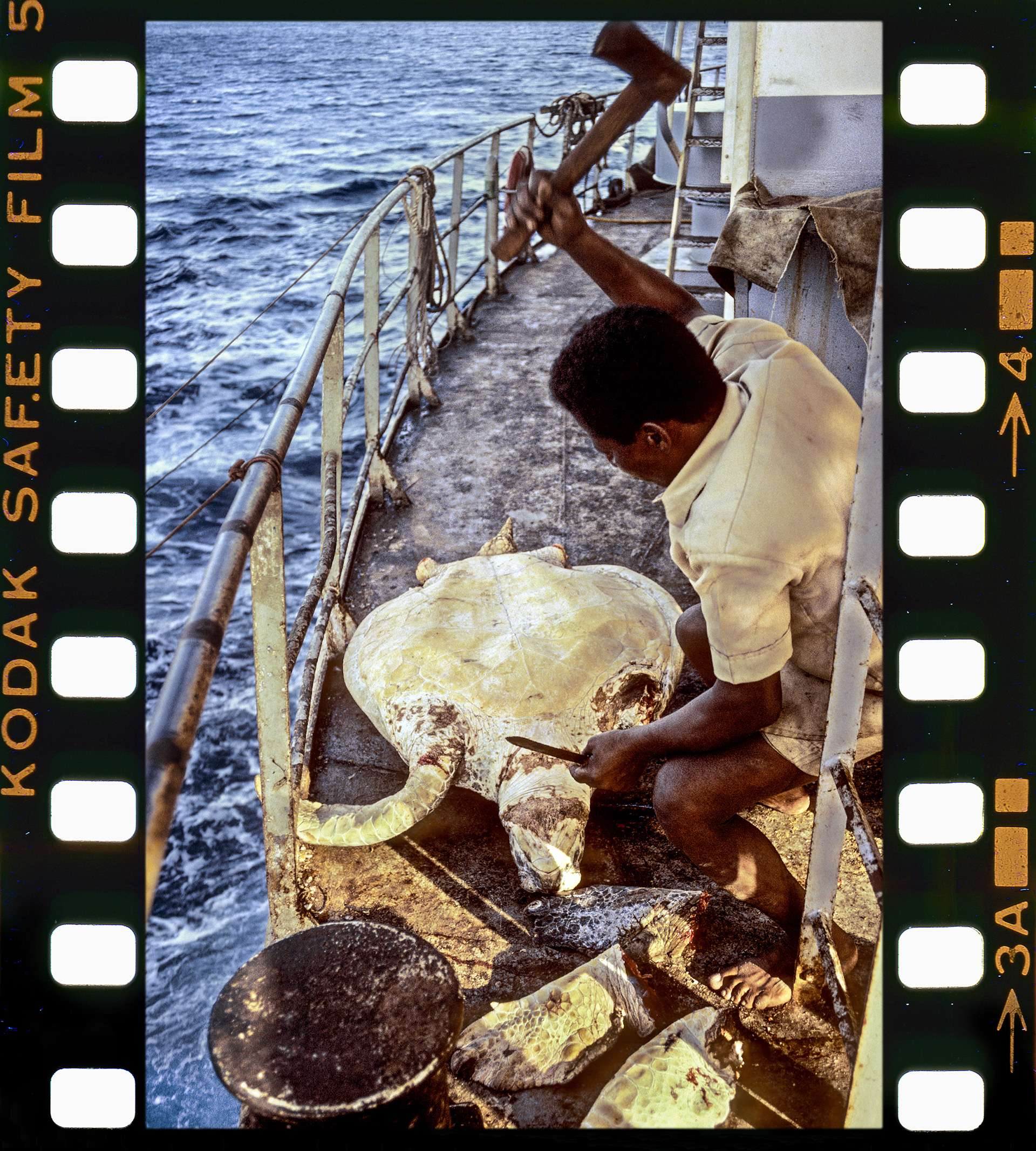 Photography by Gilles Martin of the sea turtles trafficking