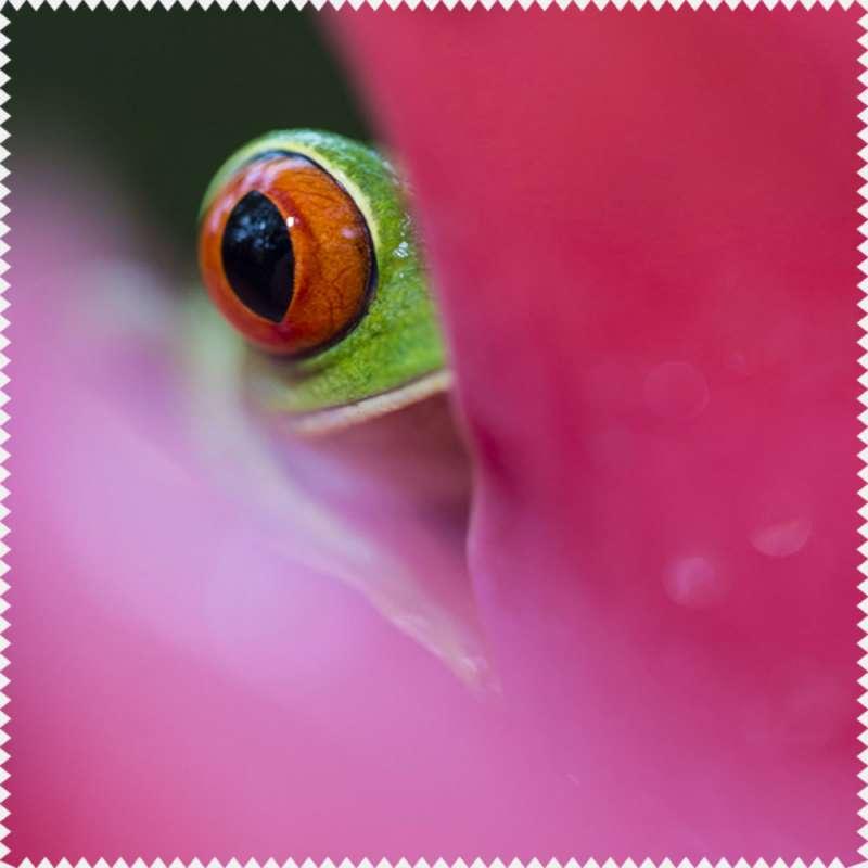 Microfibre Rainette aux yeux rouges de Gilles Martin, disponible dans la boutique en ligne