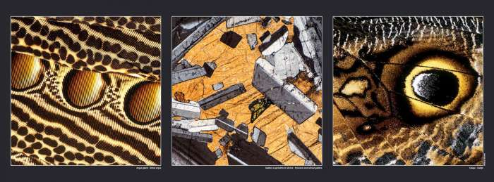 Poster Great argus - Pyroxene gabbro - Caligo butterfly , available on Gilles Martin's shop